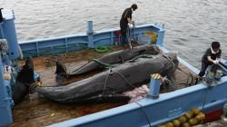 Kobo's Parent Company Rakuten is the World's Biggest Online Retailer of Elephant Ivory and Whale Meat Amazon Rakuten