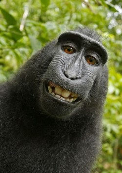 PETA Files Suit Over Monkey Selfie, Demands That the Copyright Go to the Monkey Intellectual Property