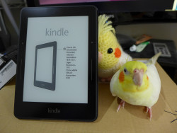Amazon Launches the Kindle Voyage (in Canada) for a Reasonable $299 e-Reading Hardware Kindle