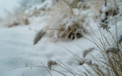 February silent blues