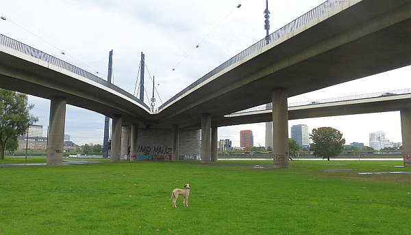 Hundefreiheit (8): Oberkassel