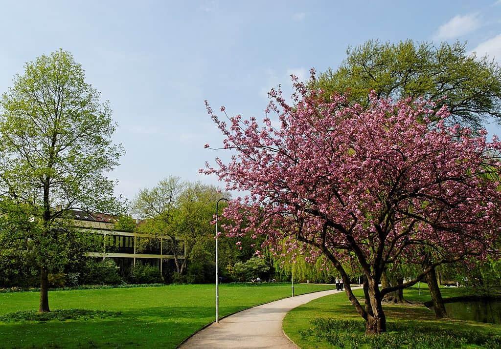 Die große Wiese im Florapark (Foto: Wikimedia)
