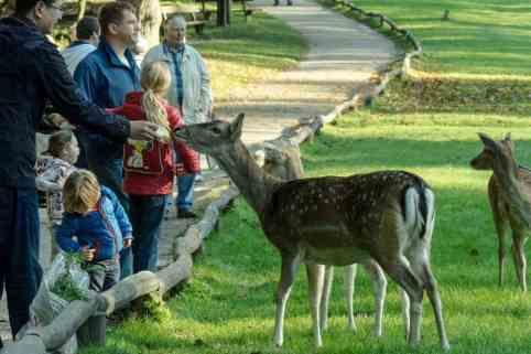 Familien im Wildpark