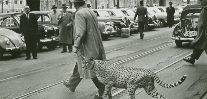 Der unbekannte Mann mit dem Geparden auf der Kö - war es Mattner (Foto: Stadtarchiv Düsseldorf)
