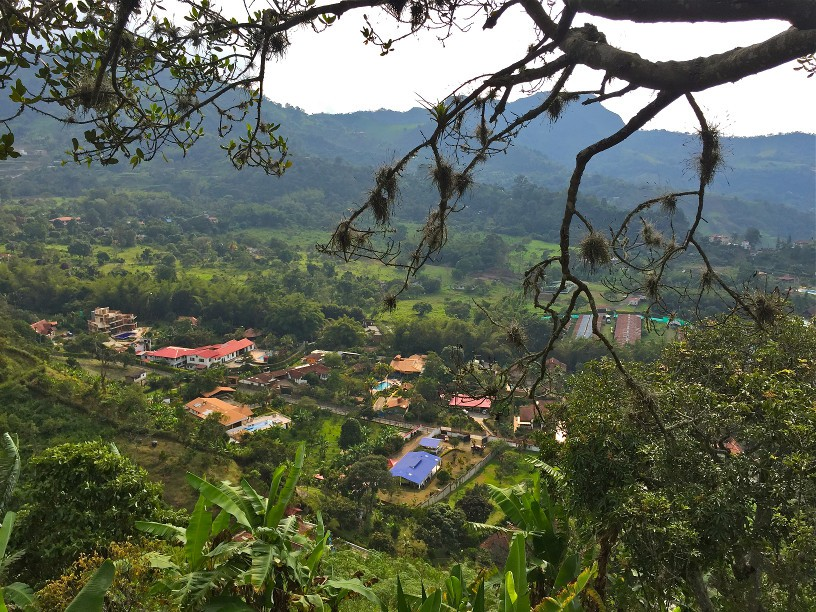 Colombia: My Ayahuasca Adventure - The Earlybird