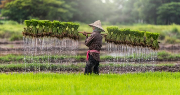 Cambodia rice blockchain