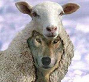 Prime Shepherd