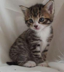 kitten+
