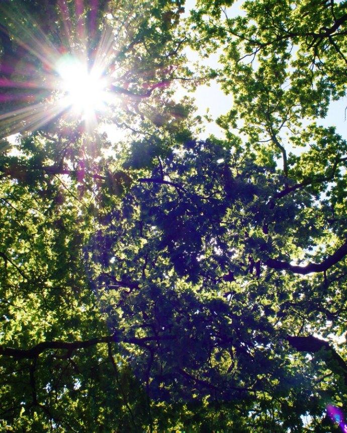 sunshine-through-the-trees