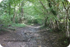 ancient drovers road
