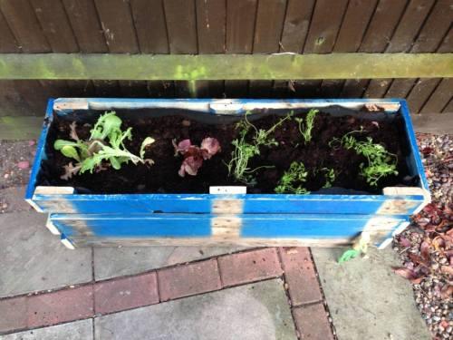 wooden pallet planter (1)