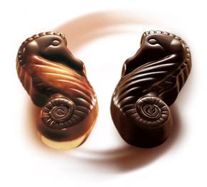 seahorses-duo