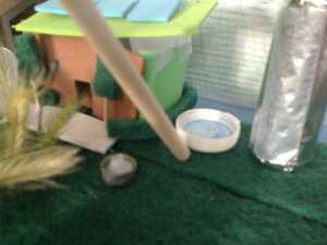 Spane's Renewable Energy Diorama - Projects for Kids