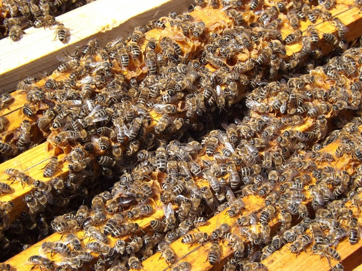 bees-486870_1280.jpg