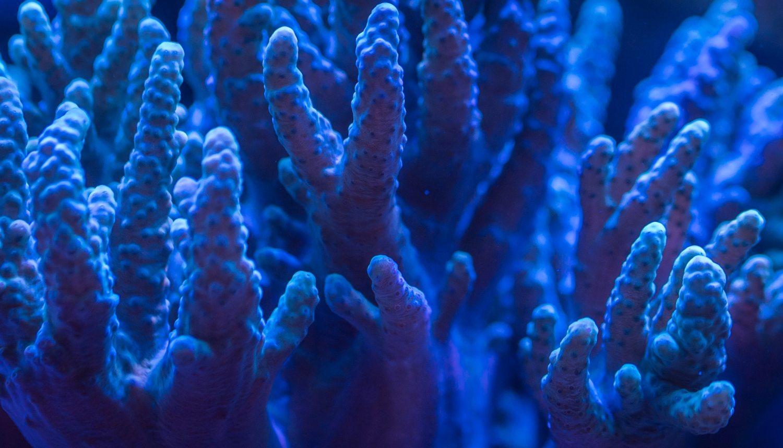 aquarium-aquatic-coral-920161.jpg