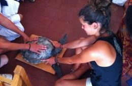turtle conservation