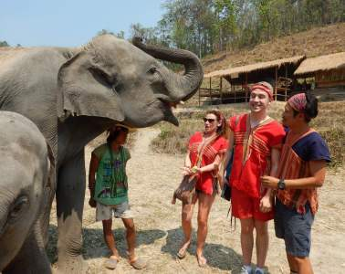 elephant tourism