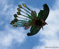 kitesbrava_00013