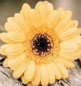 bouquet-builder-yellow-gerbera-build-a-bouquet-online-the-little-flower-shop-florist-london