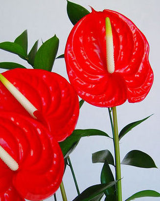 anthurium the little flower shop bouquet builder florist london