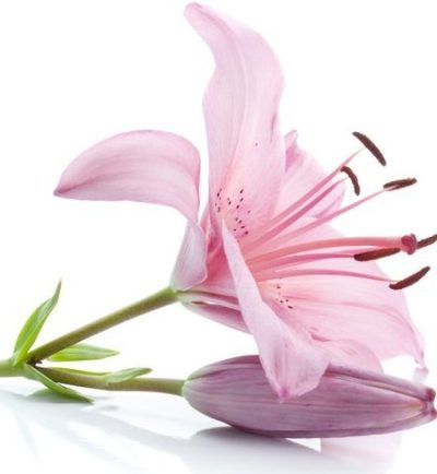 Pink lily-bouquet-builder-the-ittle-flower-shop-exotic-flowers-online