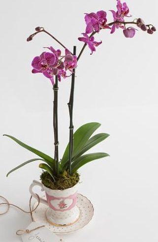 puple flowers_purple orchid_pink orchid_buy orchids_orchids_orchid plant_plants_plant delivery_plants online_flower shop_florist_floirst online_indoor plants-min