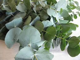 eucalyptus-foliage-bouquet-builder-the-little-flower-shop