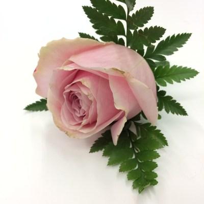 rose-buttonhole-weddings-wedding flowers-groom-buttonhole-the-little-flower-shop-wedding-flowers-for-men-boutonniere-buttonhole-best-man-flowers