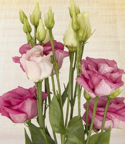 lisianthus-bouquet-builder-the-little-flower-shop-white-lisianthus-pink-lisianthus-florist-london-uk-delivery-build-your-own-bouquet