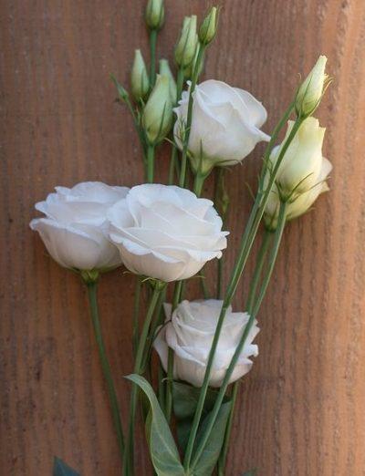 lisianthus-bouquet-builder-the-little-flower-shop-white-lisianthus-purple-lisianthus