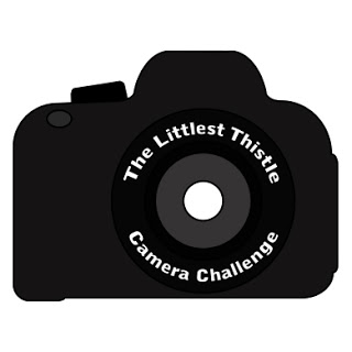 Camera Challenge 7 Review – Using Natural Light Outdoors