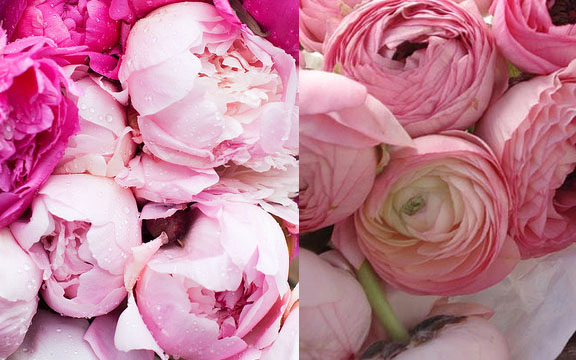 Peony (Left) Ranunculus (Right)