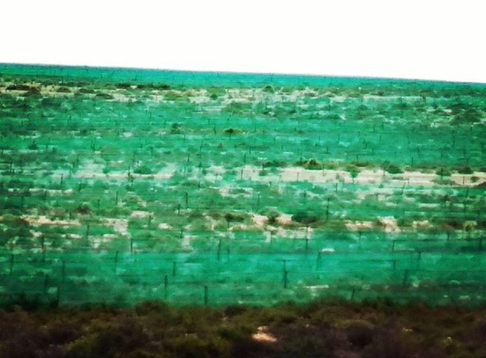Brand de Baai green netting