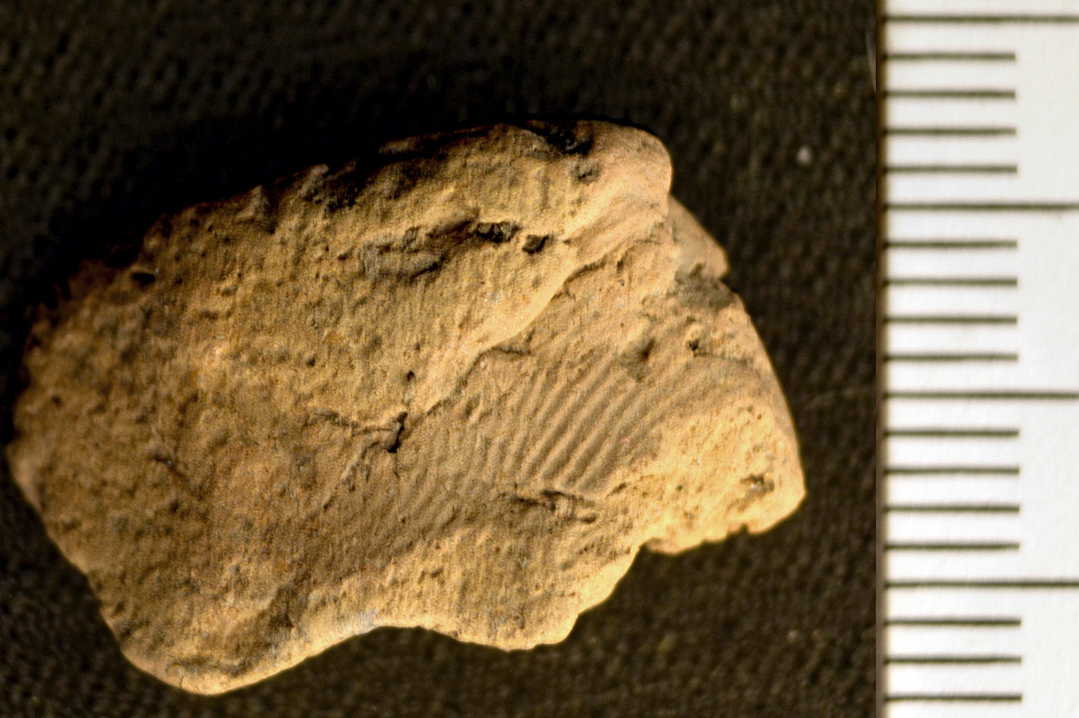 Ness of Brodgar project finds 5,000-year-old fingerprint