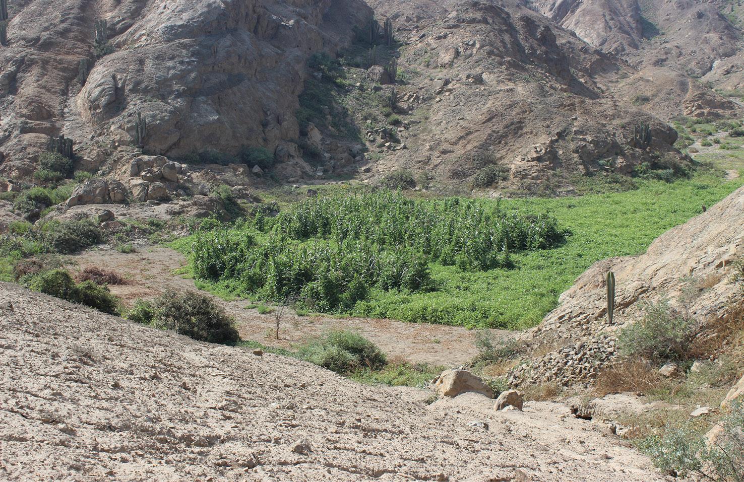 Pre-Hispanic flood-management in the Pampa de Mocan