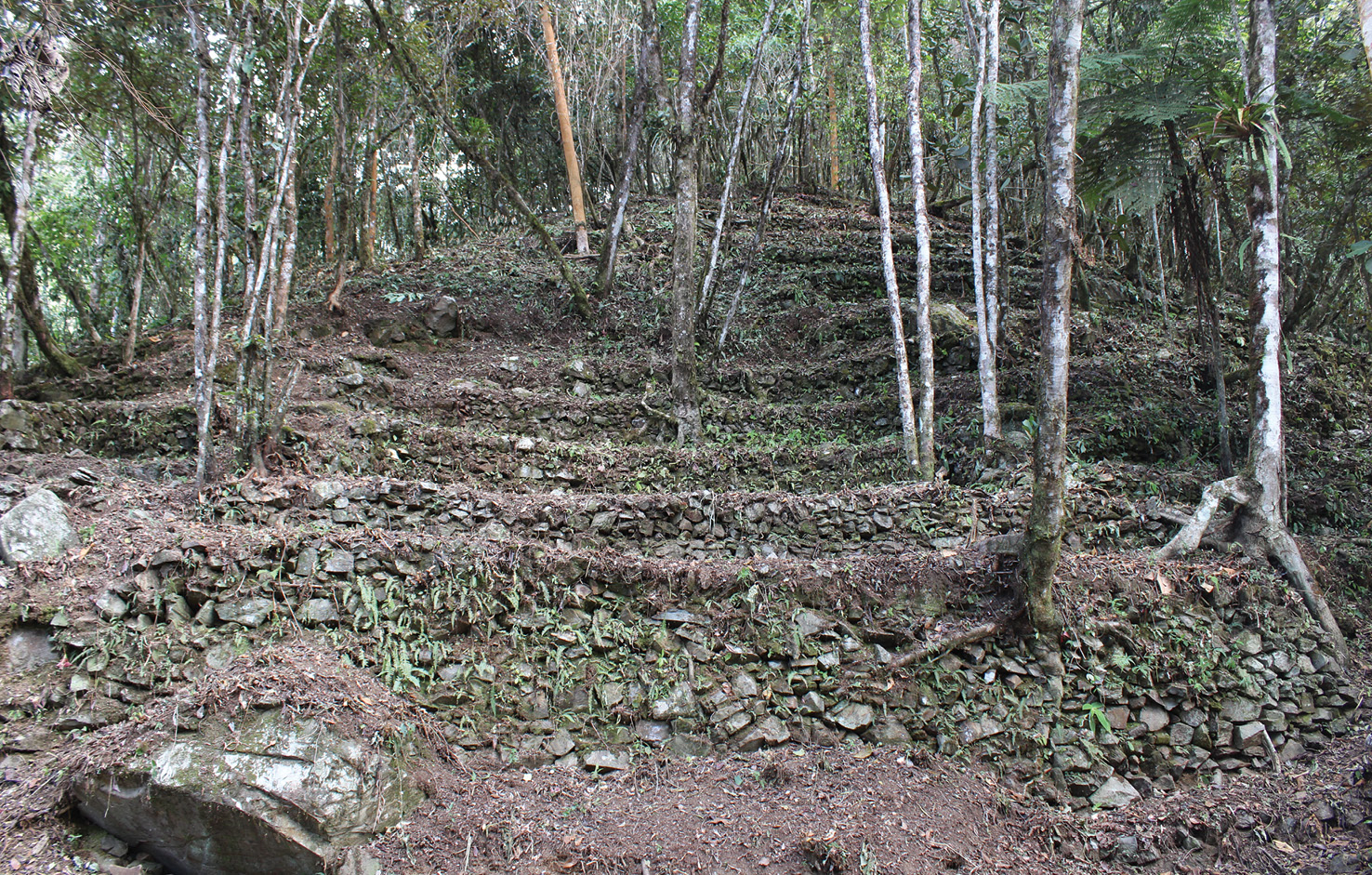 BELOW Further terraces line the slope above the main plaza. According to locals, about 8ha are covered with such features, although dense rainforest has prevented this being tested on the ground.