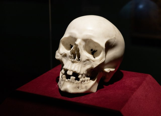 Marble skull is lost Bernini masterpiece for Pope Alexander VII, research reveals