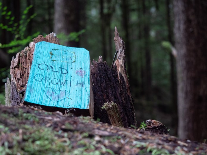 """A blue painted plank of wood leans against a tree stump. Written on the plank are the words, """"Old growth,"""" with a drawing of a heart underneath."""