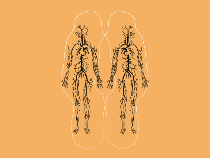 An illustration with black lines on a yellow background. It shows two bodies side by side with all their veins showing.