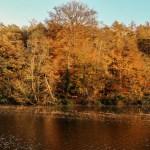 15 choses à faire en automne