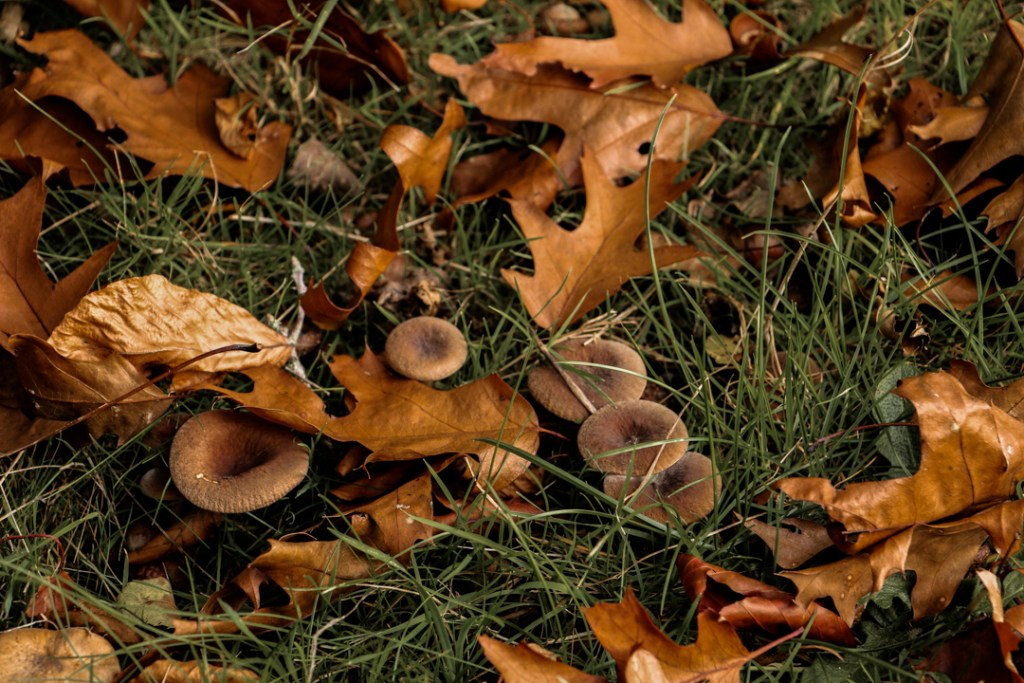 champignons automne