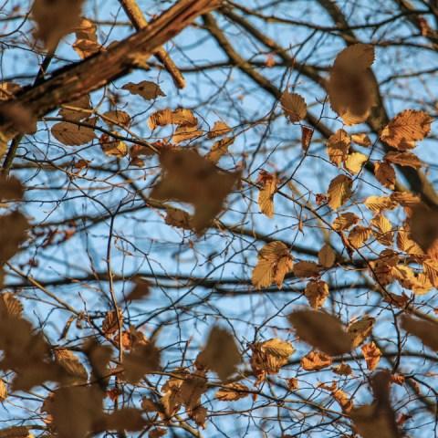 Quelques photos d'automne