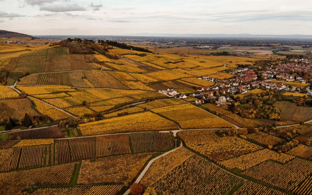 Route des Vins en automne