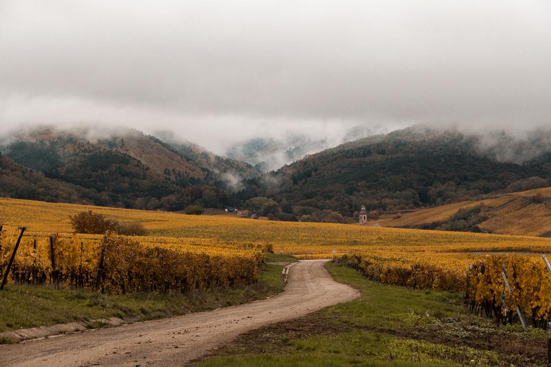 sur la route des vins alsace automne