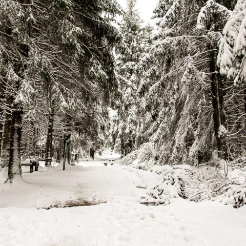 Une randonnée enneigée à la Baraque de Fraiture
