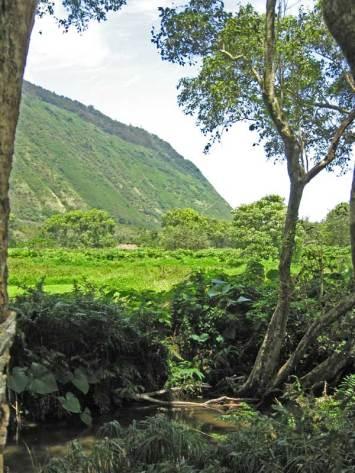 Waipio Valley looking back toward beach