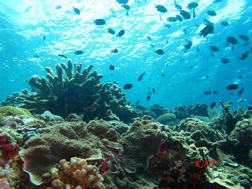 Bunaken, snorkeling, diving, underwater