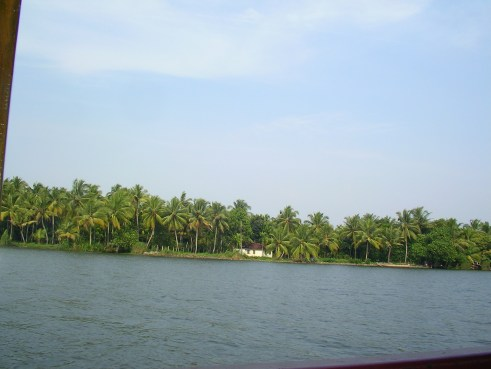 kerala, backwaters, cochin, coconut trees, palm trees, coastal india