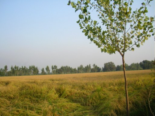 Punjab, Abohar, romantic getaway, Delhi weekend, Mohindra fruit farm