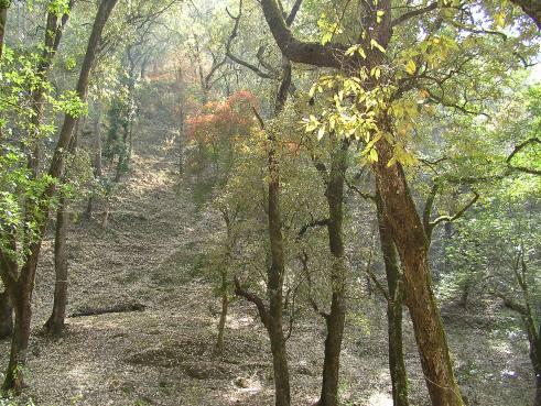 India, offbeat travel, off the beaten path, travel blog, jungle getaway, jungle camp